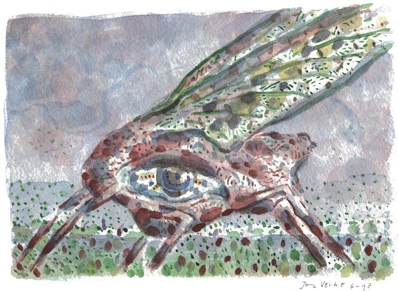 Insekt met oog